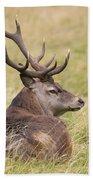 Red Deer  Cervus Elaphus Beach Towel