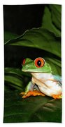 Red Eyed Green Tree Frog Beach Towel