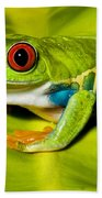 Red-eyed Treefrog Beach Towel