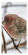 Red Finch Beach Towel