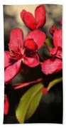 Red Flowering Crabapple Blossoms Beach Towel