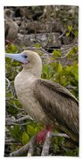 Red-footed Booby Galapagos Islands Beach Towel