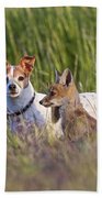 Red Fox Cub With Jack Russel Beach Towel