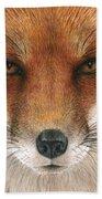 Red Fox Gaze Beach Towel
