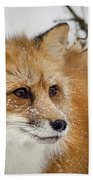 Red Fox In Snow Beach Towel
