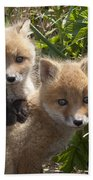 Red Fox Kits Playing Alaska Beach Towel