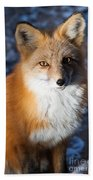 Red Fox Standing Beach Towel