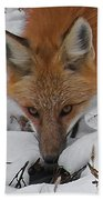 Red Fox Upclose Beach Towel