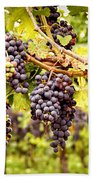 Red Grapes In Vineyard Beach Towel