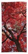 Red Leaves On Tree Beach Towel