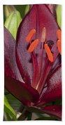 Red Lily 2 Beach Towel