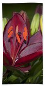 Red Lily 6 Beach Towel