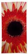 Red  Macro Daisy  Beach Sheet