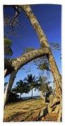 Red Mangrove Aerial Roots Beach Towel