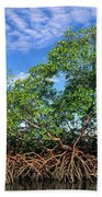 Red Mangrove East Coast Brazil Beach Towel by Pete Oxford
