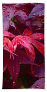 Red Maple After Rain Beach Towel