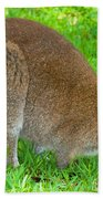 Red Necked Wallaby Beach Towel