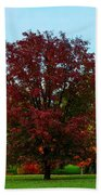Red Oak In Loose Park Beach Towel