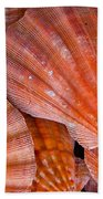 Red Orange Sea Shells Beach Towel