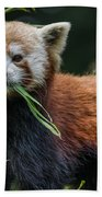 Red Panda With An Attitude Beach Towel