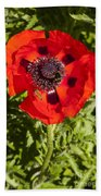 Red Poppy And Bee Beach Towel
