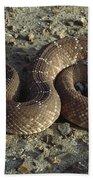 Red Rattlesnake Baja California Mexico Beach Towel