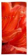 Red Rhodo Beach Towel