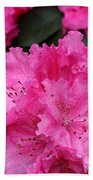 Red Rhododendrons Beach Towel