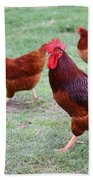 Red Rooster And Hens Beach Towel