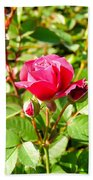 Pink Rose Buds Beach Towel