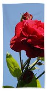 Red Roses With Blue Sky Background Beach Towel