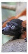 Red-ruffed Lemur Beach Towel