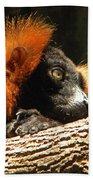 Red Ruffed Lemur Beach Towel