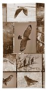 Red-shouldered Hawk Poster - Sepia Beach Towel by Carol Groenen