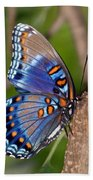 Red Spotted Purple Butterfly Beach Towel