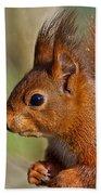 Red Squirrel 2 Beach Towel