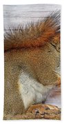 Red Squirrel Beach Towel