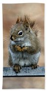 Red Squirrel On Patio Chair II Beach Towel