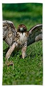 Red-tailed Hawk & Gopher Snake Beach Towel