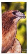 Red Tailed Hawk - 59 Beach Towel