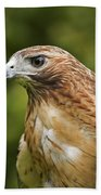 Red-tailed Hawk Beach Towel