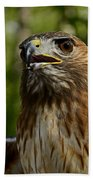 Red Tailed Hawk Beach Towel