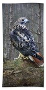 Red Tailed Hawk Perched On A Rock Beach Towel