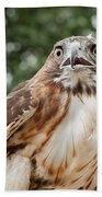 Red-tailed Hawk Square Beach Towel by Bill Wakeley