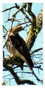 Red Tailed Interest Beach Towel