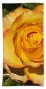 Red-tipped Yellow-orange Rose Beach Towel