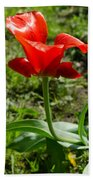 Red Tulip On The Green Background Beach Towel