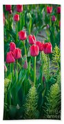 Red Tulips In Skagit Valley Beach Towel by Inge Johnsson