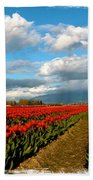 Red Tulips Of Skagit Valley Beach Towel