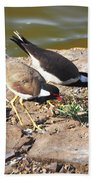 Red-wattled Lapwing Beach Towel